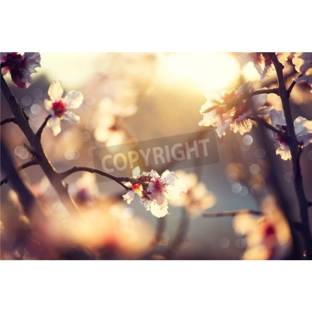 Beautiful nature scene with blooming tree