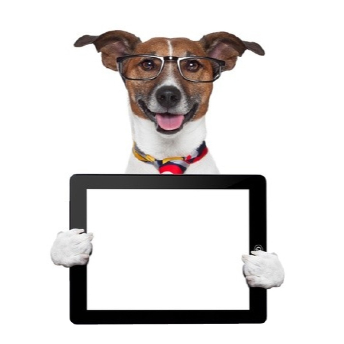 Dog With Tablet