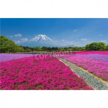 Fuji With Pink Moss