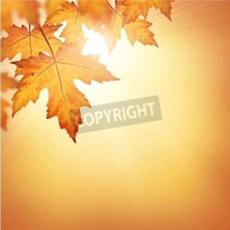 Orange Fall
