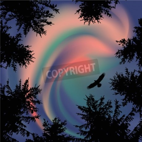 Silhouette of coniferous trees on the background of colorful sky. Aurora. Sunset. Flying eagle