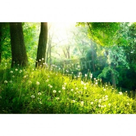 Spring Nature Beautiful Landscape Green Grass and Trees